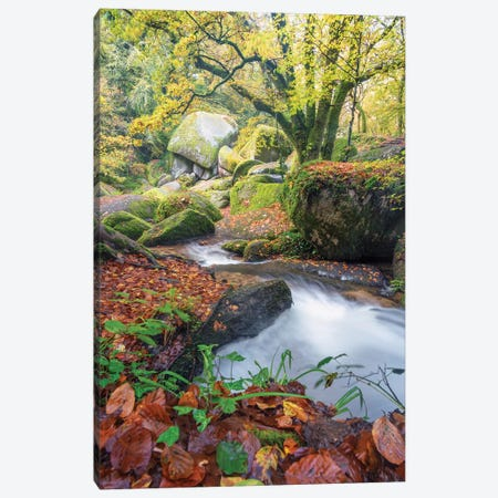 Foret De Huelgoat En Bretagne Canvas Print #PHM370} by Philippe Manguin Canvas Artwork