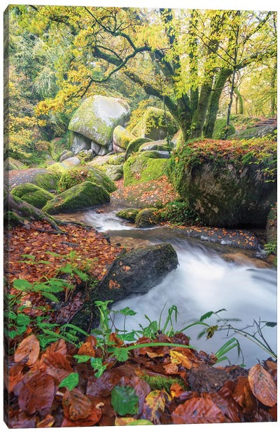 Foret De Huelgoat En Bretagne Canvas Art Print