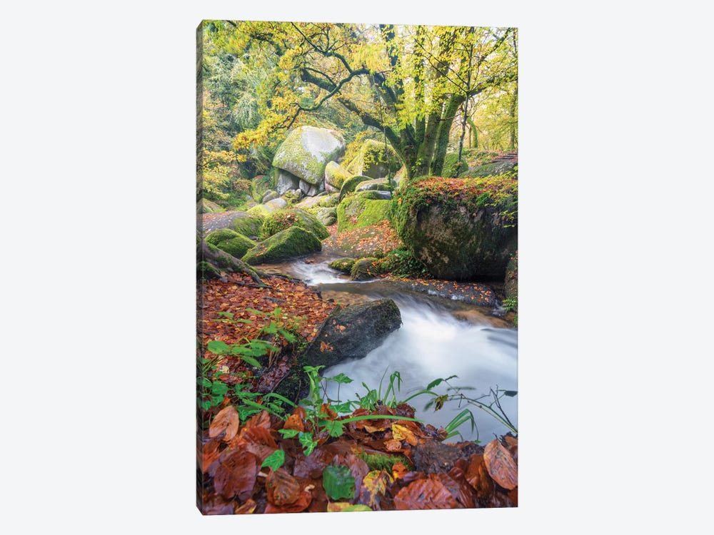 Foret De Huelgoat En Bretagne by Philippe Manguin 1-piece Canvas Art