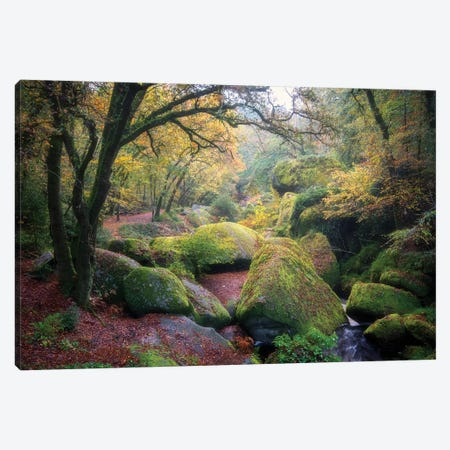La Foret De Huelgoat En Bretagne Canvas Print #PHM371} by Philippe Manguin Canvas Artwork