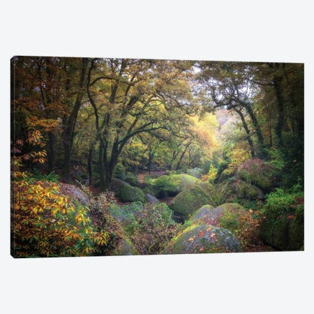 Le Chaos En Foret De Huelgoat, Bretagne Canvas Print #PHM372} by Philippe Manguin Canvas Art