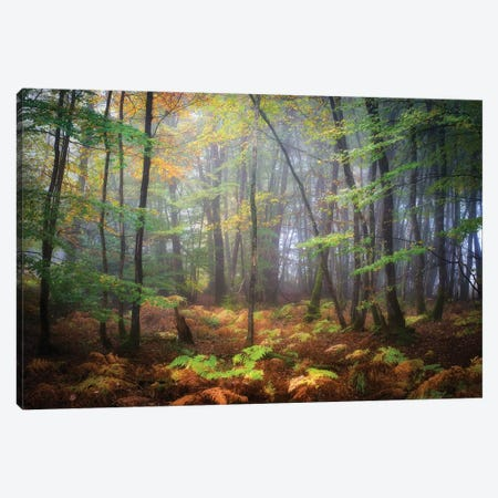 Colored Rain In Deep Forest Canvas Print #PHM40} by Philippe Manguin Art Print
