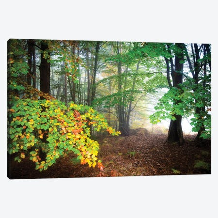 Colored Season Canvas Print #PHM41} by Philippe Manguin Canvas Art Print