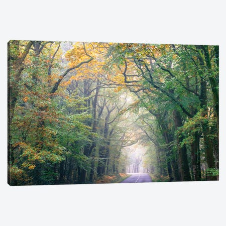 Crossing The Forest Canvas Print #PHM43} by Philippe Manguin Canvas Art Print
