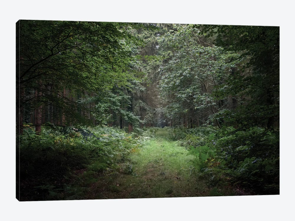 Deep Forest by Philippe Manguin 1-piece Canvas Wall Art