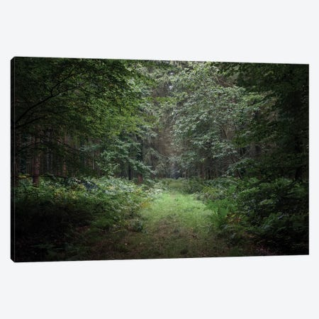 Deep Forest Canvas Print #PHM44} by Philippe Manguin Canvas Art