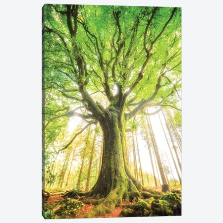 The Big Tree Canvas Print #PHM454} by Philippe Manguin Canvas Wall Art