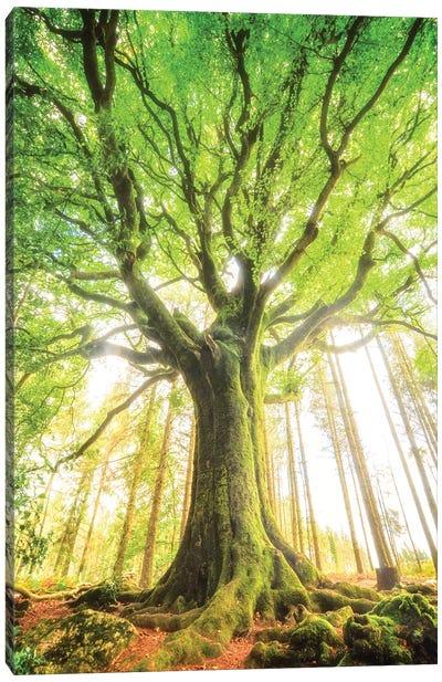 The Big Tree Canvas Art Print