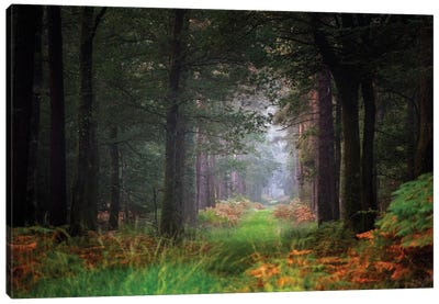 Entering The Forest Canvas Art Print