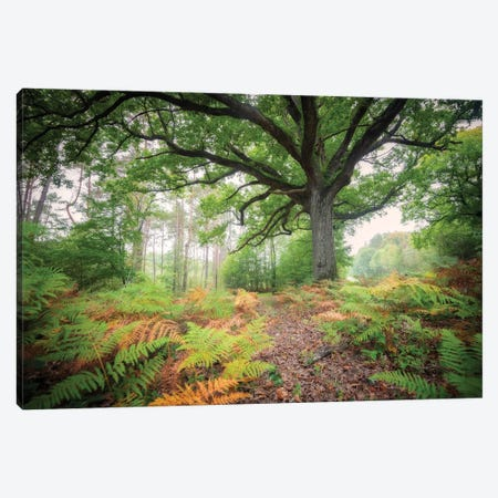The Protector Oak Tree Canvas Print #PHM462} by Philippe Manguin Canvas Artwork