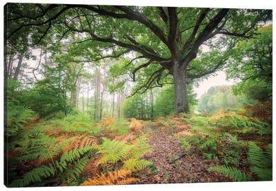 The Protector Oak Tree Canvas Art Print