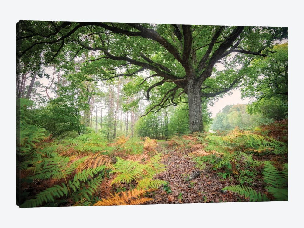 The Protector Oak Tree by Philippe Manguin 1-piece Canvas Artwork