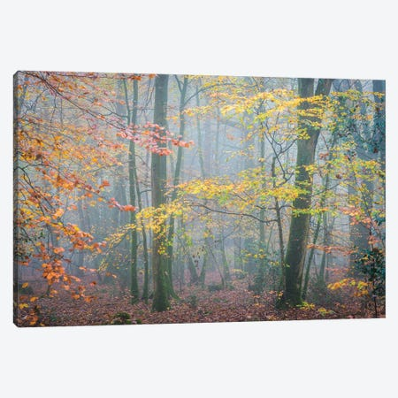 October Forest Mood Canvas Print #PHM468} by Philippe Manguin Canvas Wall Art