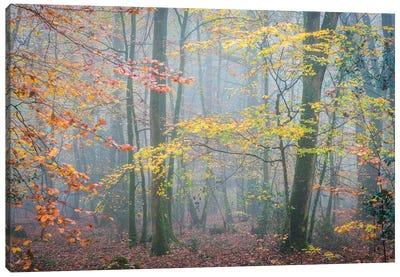 October Forest Mood Canvas Art Print