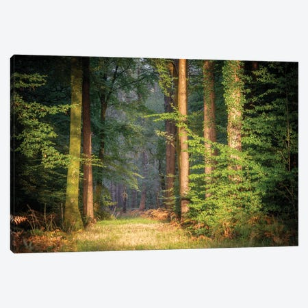 Sweet End Day In The Forest Canvas Print #PHM469} by Philippe Manguin Canvas Art
