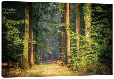Sweet End Day In The Forest Canvas Art Print