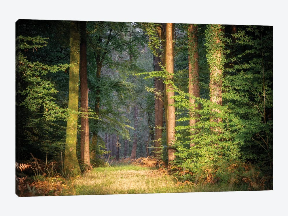 Sweet End Day In The Forest by Philippe Manguin 1-piece Art Print