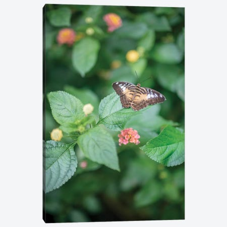 Délicate Nature Canvas Print #PHM46} by Philippe Manguin Canvas Art