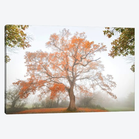 The Red Oak Canvas Print #PHM475} by Philippe Manguin Canvas Art