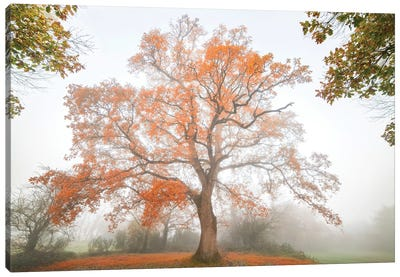 The Red Oak Canvas Art Print