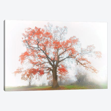 The Red Oak In The Myst Canvas Print #PHM476} by Philippe Manguin Canvas Artwork