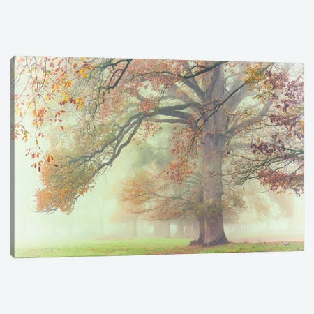 The Lonely Oak Canvas Print #PHM477} by Philippe Manguin Canvas Wall Art