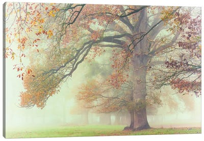 The Lonely Oak Canvas Art Print