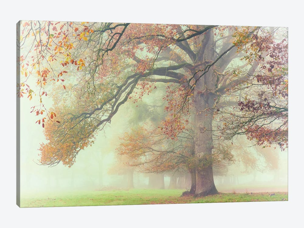 The Lonely Oak by Philippe Manguin 1-piece Canvas Wall Art