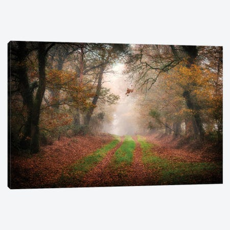 Foggy Forest Canvas Print #PHM479} by Philippe Manguin Art Print