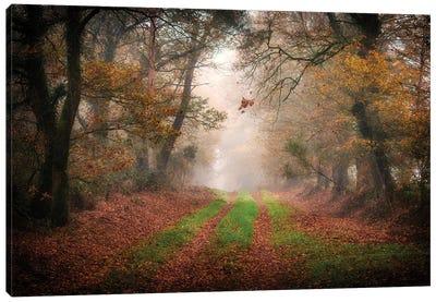 Foggy Forest Canvas Art Print
