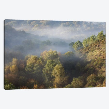 Foggy Forest Landscape Canvas Print #PHM492} by Philippe Manguin Canvas Print