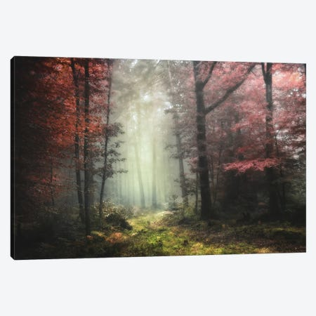 Dream Forest Canvas Print #PHM57} by Philippe Manguin Canvas Print
