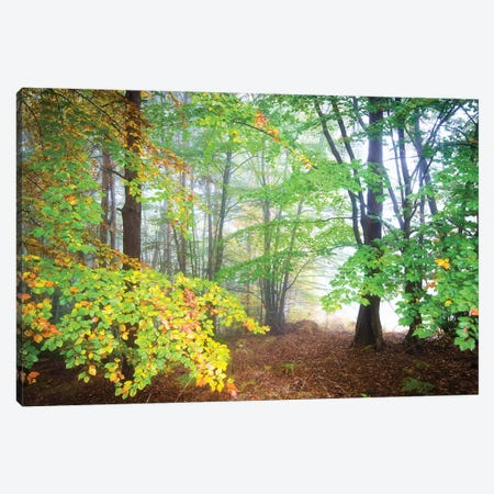 Fall Canvas Print #PHM73} by Philippe Manguin Canvas Artwork