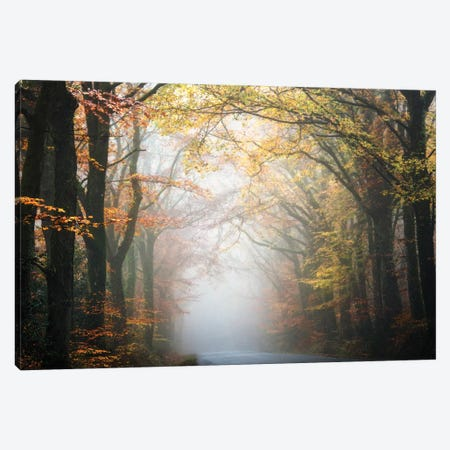Forest By The Road Canvas Print #PHM78} by Philippe Manguin Canvas Art