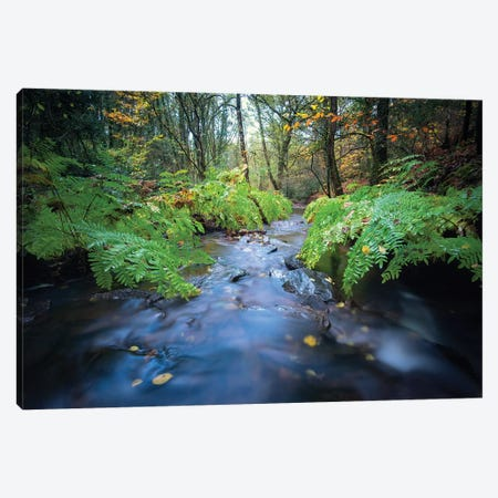Forest River Canvas Print #PHM80} by Philippe Manguin Canvas Print
