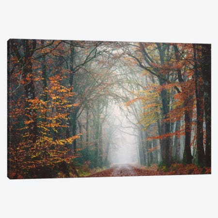 Forest Walk At Fall Canvas Print #PHM81} by Philippe Manguin Canvas Print