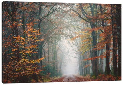 Forest Walk At Fall Canvas Art Print