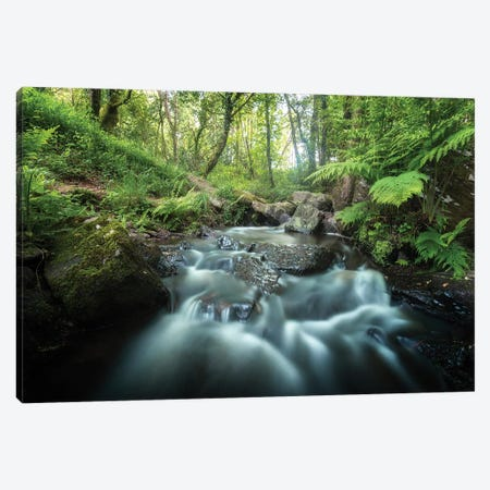 Fresh Forest Canvas Print #PHM85} by Philippe Manguin Canvas Art