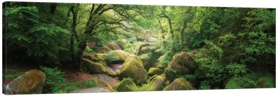 Huelgoat Forest Bretagne Panoramic Canvas Art Print