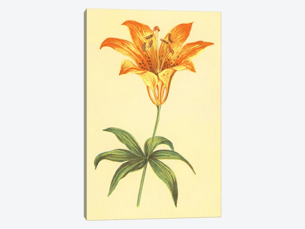 Wild Orange Lily 1-piece Art Print