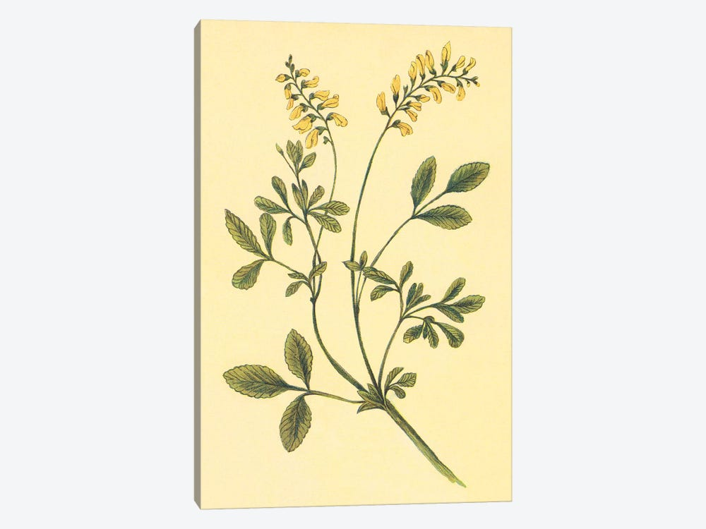 Yellow Melilot And Sweet Clover by PI Collection 1-piece Art Print
