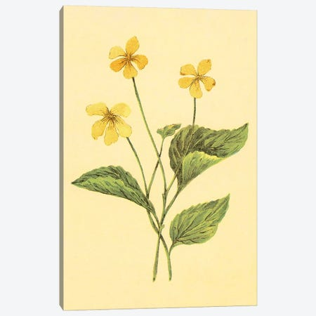 Yellow Violet Canvas Print #PIC108} by PI Collection Canvas Wall Art