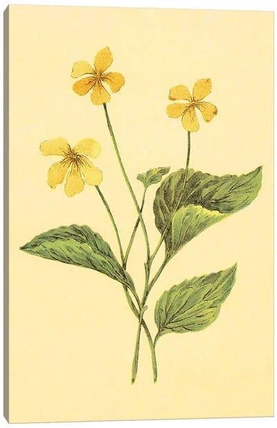 Yellow Violet Canvas Art Print