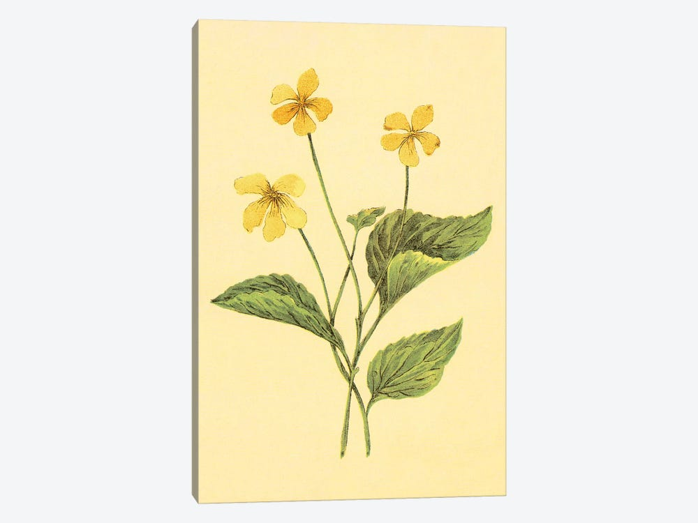 Yellow Violet by PI Collection 1-piece Canvas Artwork
