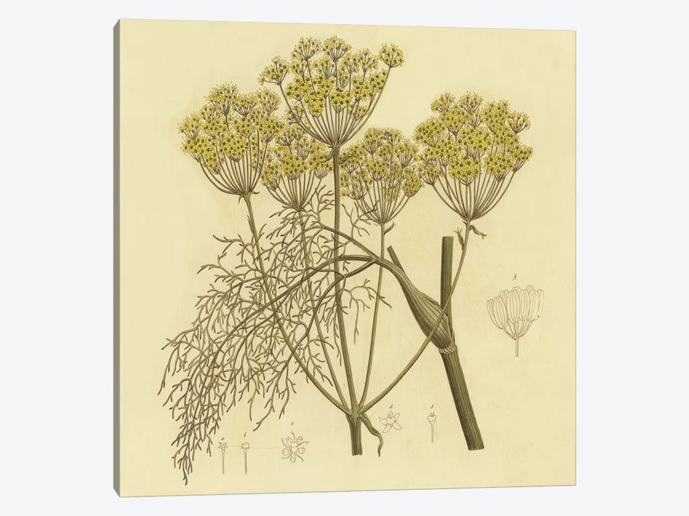 Yellow Weeds by PI Collection 1-piece Canvas Print