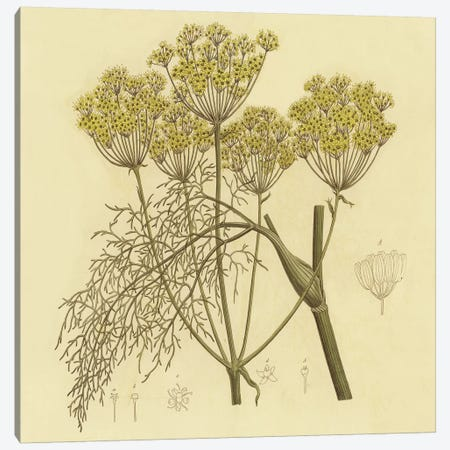 Yellow Weeds Canvas Print #PIC109} by PI Collection Canvas Artwork