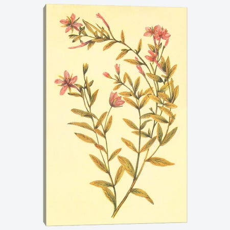 Broad Leaved Fireweed Canvas Print #PIC11} by PI Collection Canvas Art Print