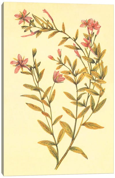 Broad Leaved Fireweed Canvas Art Print