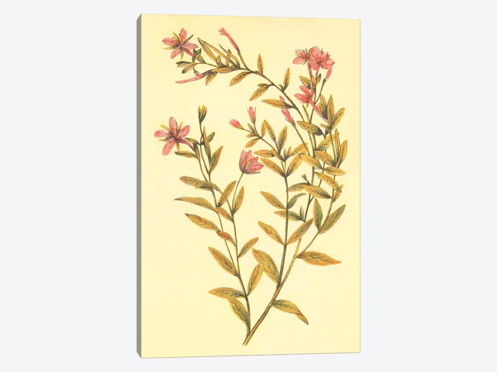 Broad Leaved Fireweed 1-piece Canvas Print