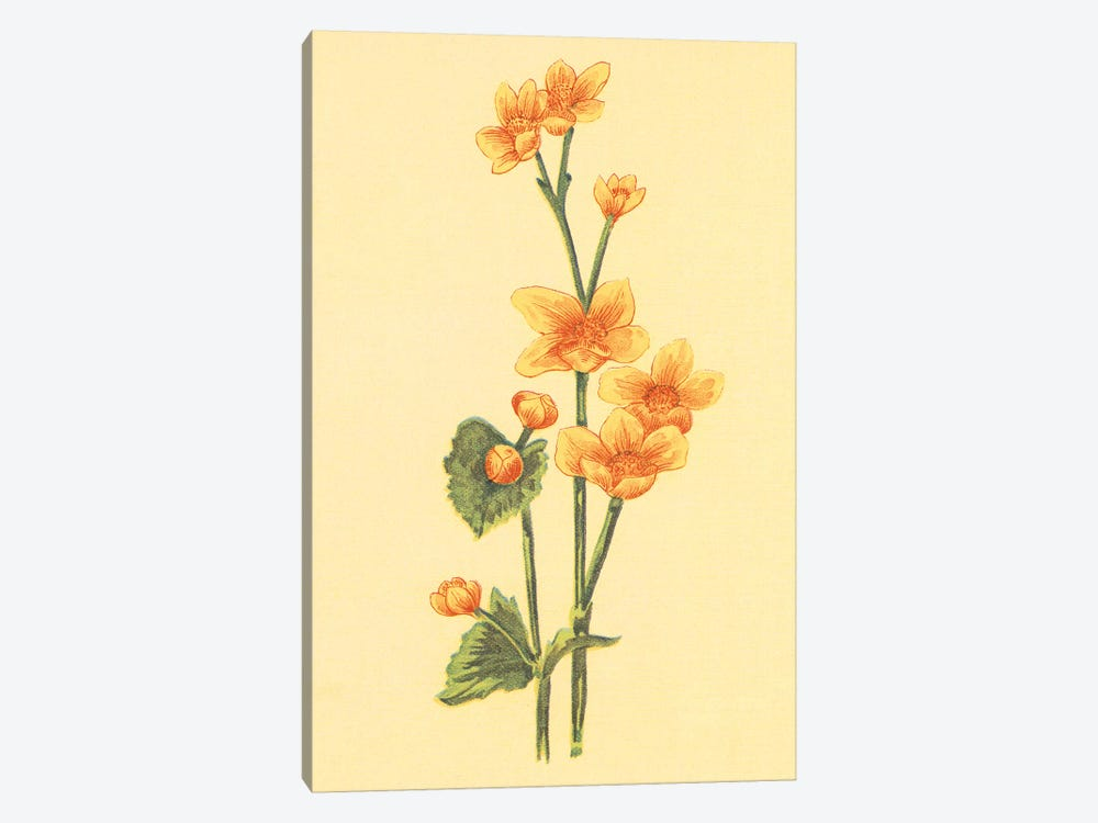 Caltha Palustris by PI Collection 1-piece Canvas Art
